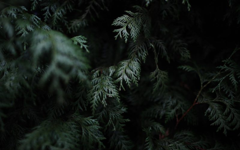 hinoki-bath-products-japanese-cypress-favorites